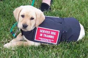 How can service dogs help Parkinson's?